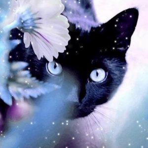 Diamond painting zwarte kat